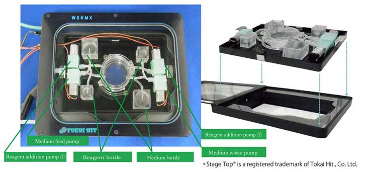 Stage Top Live Cell Imaging fluidic system